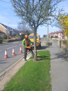 Stannington Tree Cutting